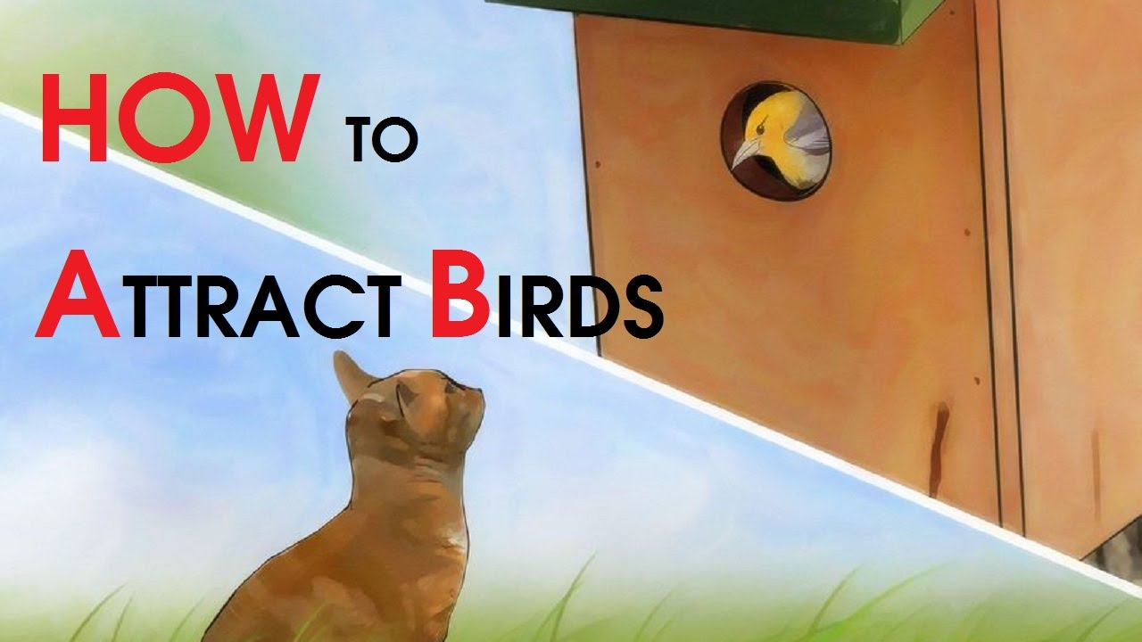 how to attract birds youtube