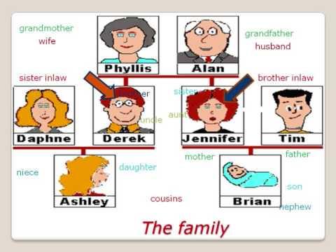 Curso de ingl s la familia vocabulario basico english for Nombres de arboles en ingles