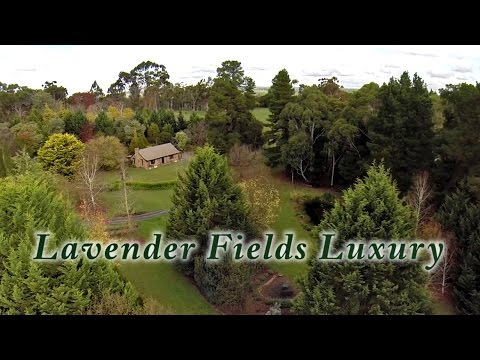 Luxury Accommodation Adelaide Hills - Lavender Fields Luxury Accommodation