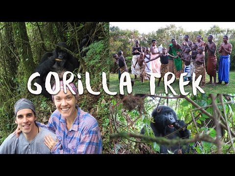 GORILLA TREK RWANDA   Africa Vlog 8