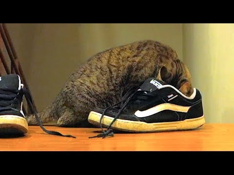 Mean Kitty EATS SHOES!