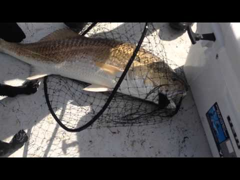 "Capt Black Lands a 40""+ Redfish in Baffin Bay Texas"
