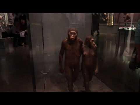 American Museum Of Natural History Hall Of Human Origins