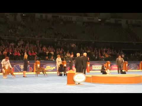 Scottish Terrier 'Sadie' wins Best in Show at 2009 AKC Eukanuba National Championship