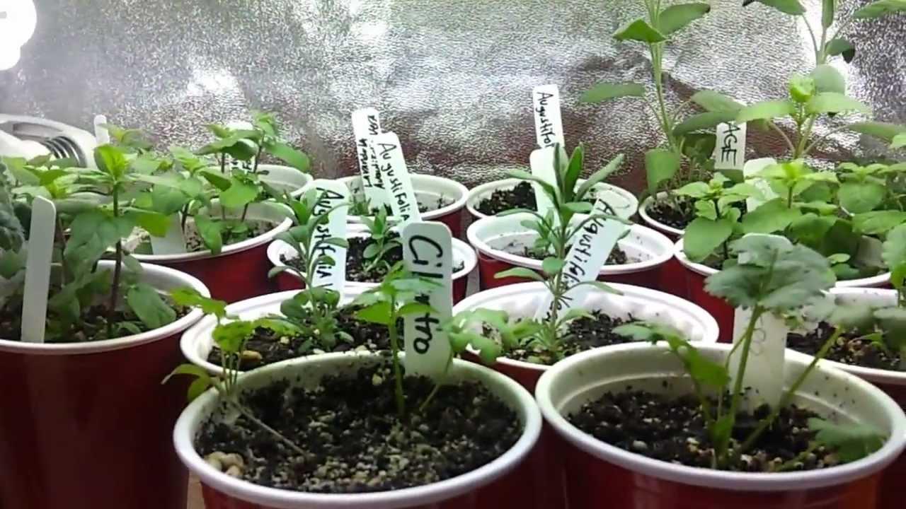 Indoor Herb Garden Indoor Fruit And Vegetable Garden 3 16 13
