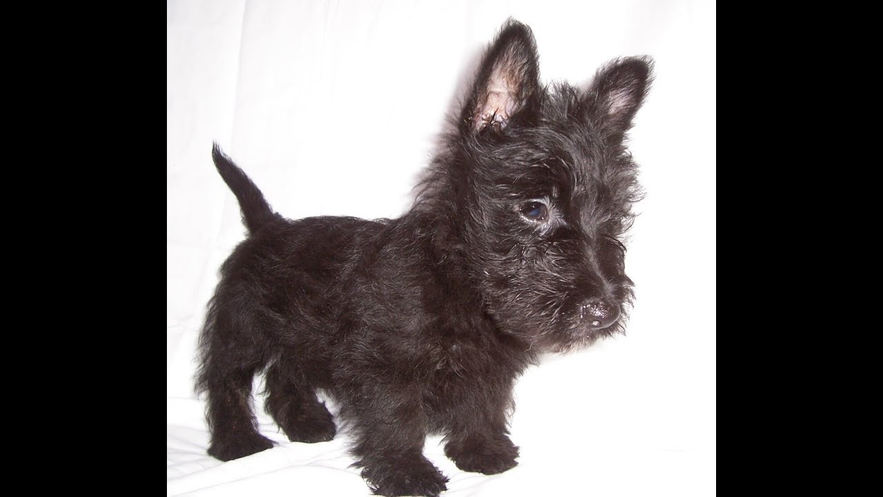 Kijiji Small Dogs For Sale