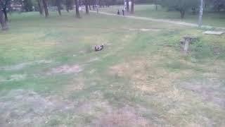 Пьяная девка прелягла отдохнуть в парке