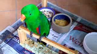 Papagei Otto das Sprachwunder singt Bier her!