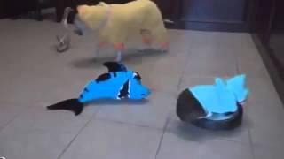 Прикол с собакой Акула кот, утки и утки собака Shark Cat, Shark Duck and Duck Dog Жми и смотри!