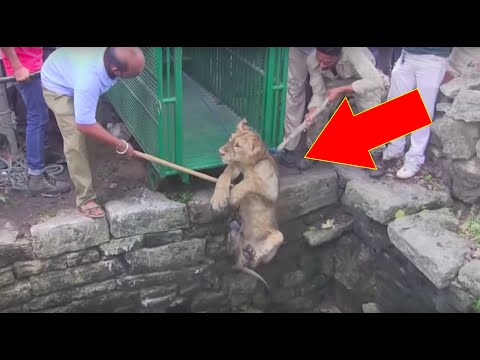 When Locals Saw A Lion Drowning In An 80Ft Well, They Put A Daredevil Rescue Plan Into Action…