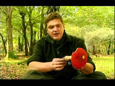Ray Mears'  Wild Food Episode 5