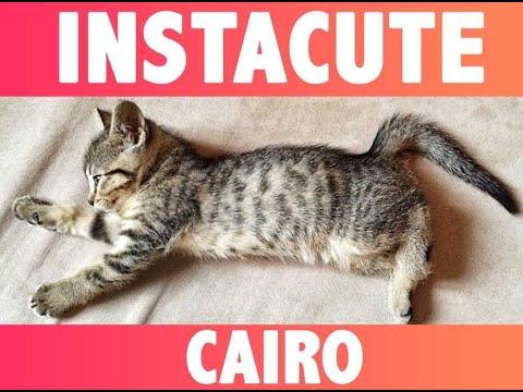 Cairo : Le chat du rappeur Macklemore !