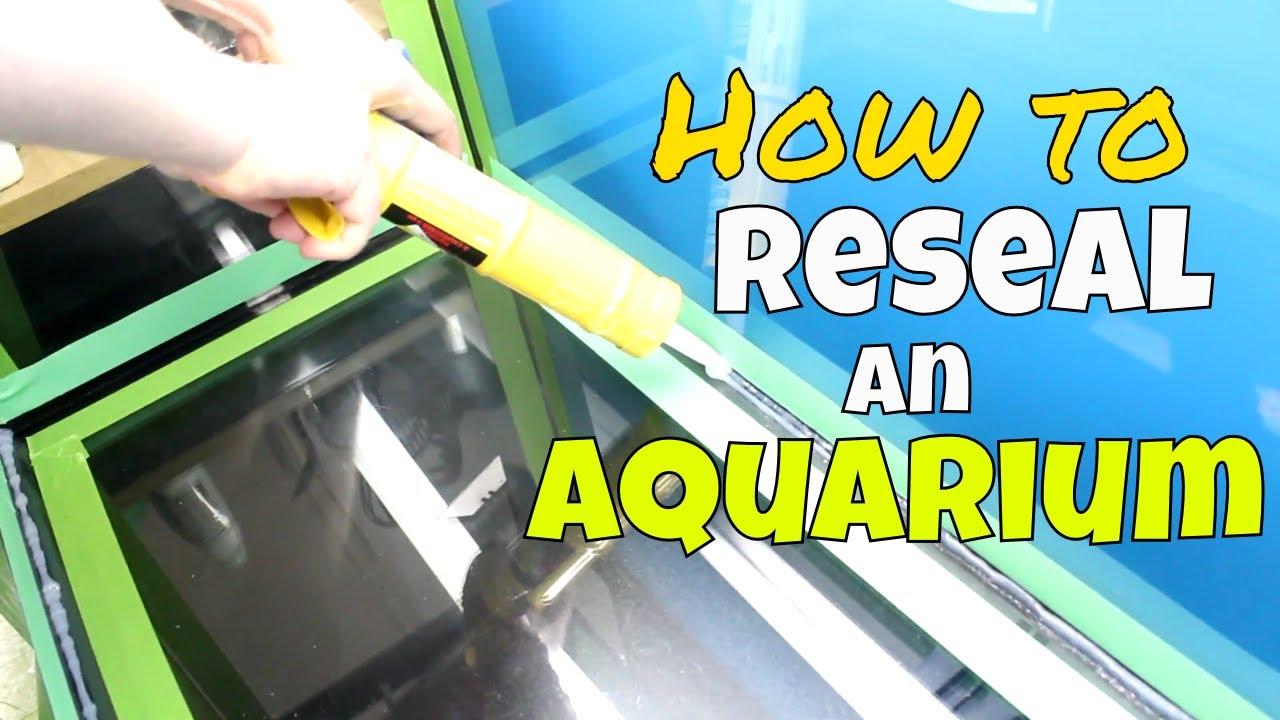 How to Reseal an Aquarium   Resealing Our 75 Gallon Fish Tank