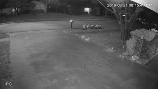 Angel's caught on home security camera(10)