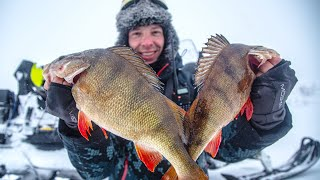 ЖИРНЫЕ ОКУНИЩА Экспедиция в Нарьян Мар Рыбалка на окуня на тундровых озерах