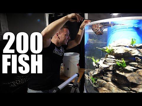 Adding Fish To Aquarium And SECRET DIY Tank Build Reveal!!