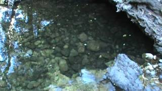 Trout in creek along Trabuco Creek Trail