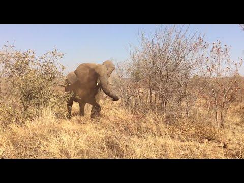 Become a Wildlife Volunteer in Victoria Falls - Africa