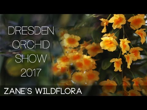 On The Go: Dresden Orchid Show Trip - Botanical Garden & Altstadt - DAY 2