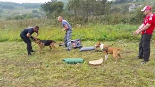 собаки в работе