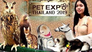 Pet Expo Thailand 2019 อาณาจักรแห่งสัตว์เลี้ยงเพื่อนรัก 🐿️🦌🐅🐕 | NamsomVlog