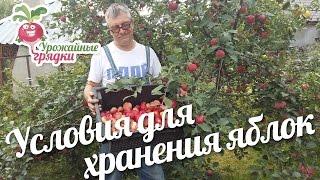 Условия для длительного хранения яблок. Как избежать гниения яблок? #urozhainye_gryadki(, 2016-09-20T12:00:00.000Z)