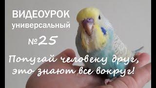 """🎶 Учим попугая говорить. Урок № 25: """"Попугай человеку друг, это знают все вокруг!"""""""
