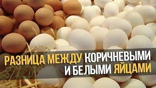 видео Чем отличаются белые яйца от коричневых
