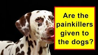 Are the painkillers given to the dogs?