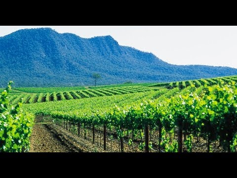 Hunter Valley Vineyard Stay And Winery Tour, Australia~