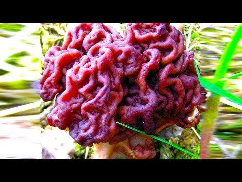 14 BIZARRE Things in Nature