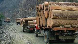 Burmese Timber Still Smuggling Into China (VOA Burmese)