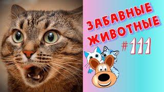 Приколы с Животными 111 Смешные Животные 2020 Приколы Приколы про Животных Лучшие Приколы