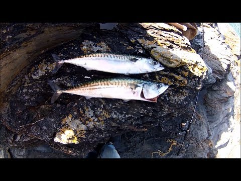 Shore Fishing - Spinning for Mackerel - Tips for Beginners