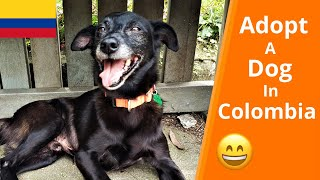 How We Adopted A Dog In Colombia   Adoption Story (2019)