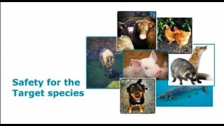 Guidance document on safety of feed additives for target animals