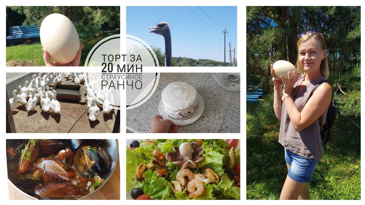 Готовлю ТОРТИК🎂Страусиная ферма🦚Прогулка ВДВОЁМ🙈 #страусинаяферма #рецепттортика