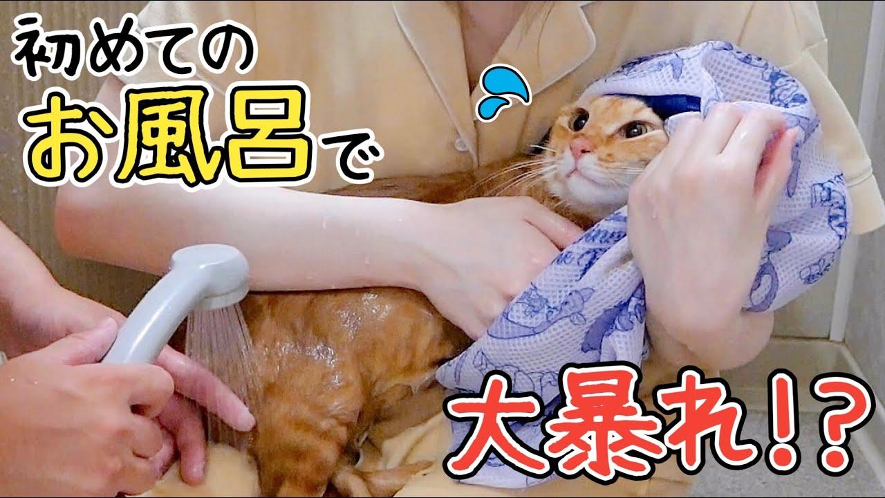 嫌がる元野良猫を無理やりお風呂に入れた結果...