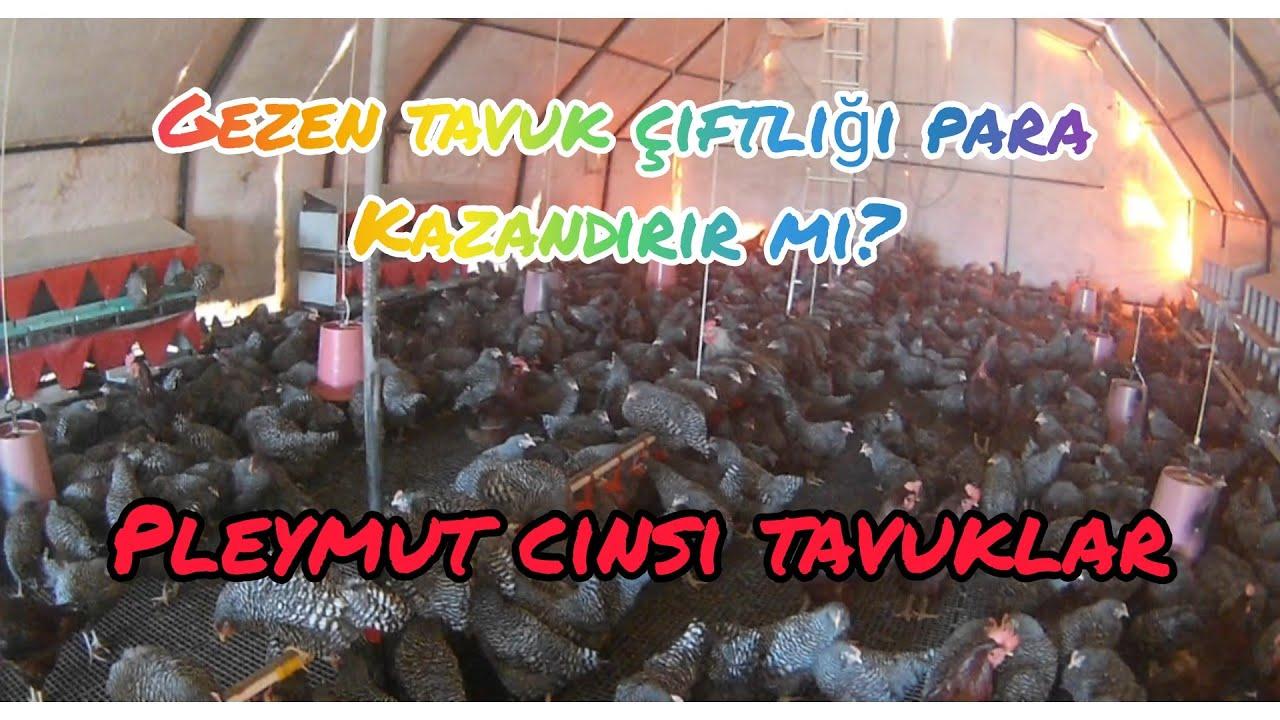 VERİMLERİNE GÖRE TAVUK IRKLARI #Tavukçuluk  #TavukCinsleri #NasılParaKazanılır