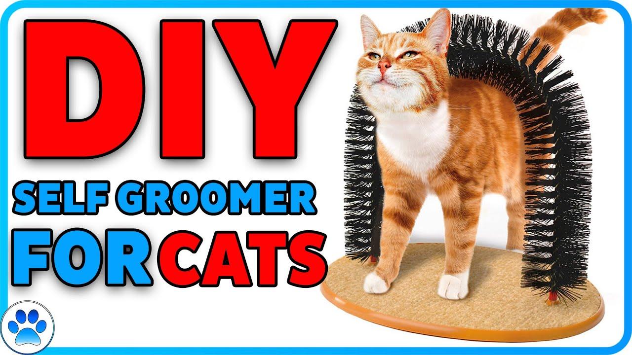 D I Y Cat Self Groomer Low Cost Diy Youtube