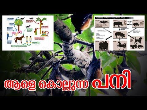 ആളെ കൊല്ലുന്ന പനി I Nipah virus issues in kerala