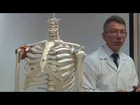 Остеология видео уроки позвонки