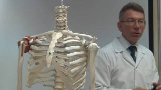 Анатомия позвоночного столба. Строение позвонков.