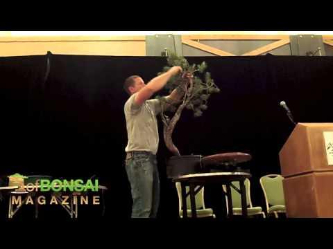 Kỹ thuật tạo hình cây cảnh, bonsai (Demo by Ryan Neil BCIABS) bonsai styling techniques 1