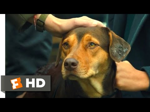 A Dog's Way Home (2018) - Standing Up to the Dogcatcher Scene (10/10) | Movieclips