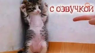 Смешные коты с озвучкой