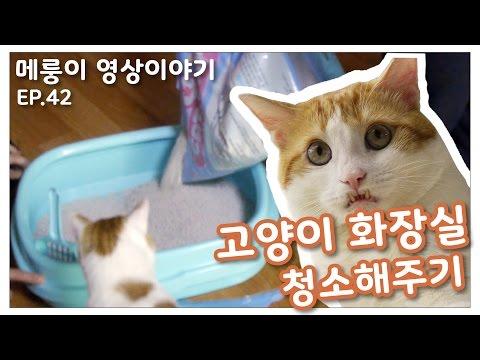 화장실이 깨끗해졌다옹~ [Merung Orc Cat_Ep.42 고양이 화장실 청소해주기]