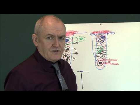 Wounds and healing 7, Healing physiology