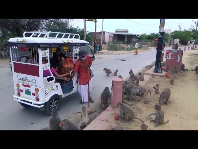 Vraja Dham Seva | Gau Seva at Govardhan