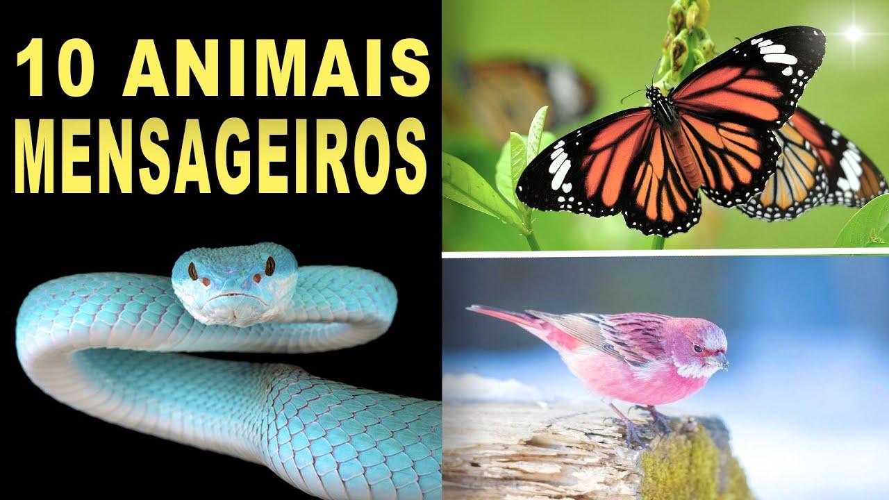 O Significado Destes 10 Animais Aparecerem com Frequência ou em Sonhos